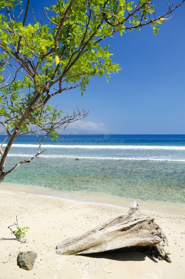 Strand och kust nära dili i East Timor arkivbild