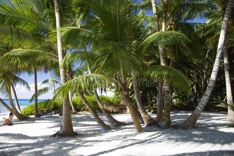Strand och palmträd av den tropiska ön av Saona arkivfoton