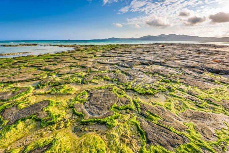 Strand in Okinawa royalty-vrije stock foto