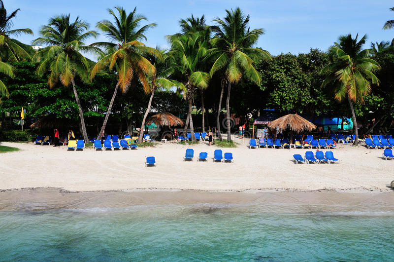 Strand onder de Palmen stock fotografie