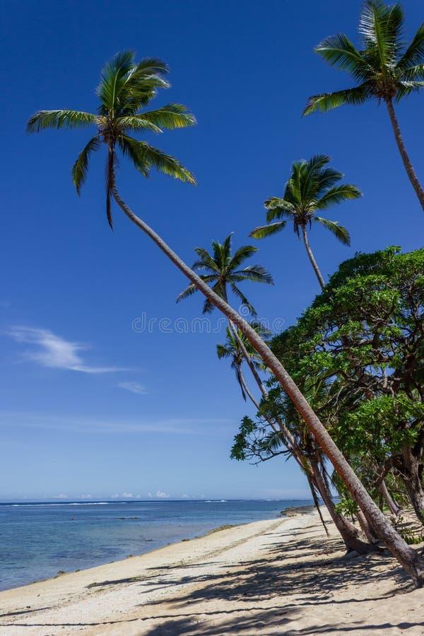 Strand op het tropische eiland duidelijke blauwe water Dravunieiland, Fiji stock afbeelding
