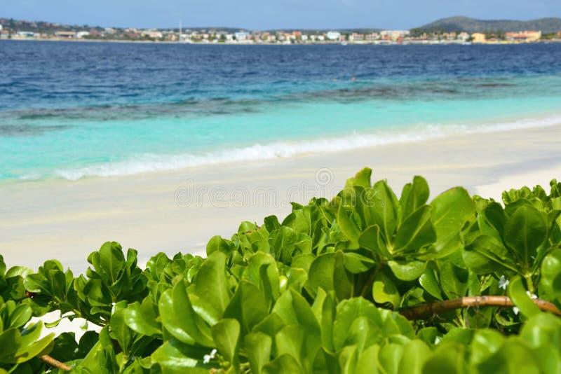 Strand på den Klein Bonaire ön som är karibisk royaltyfria bilder