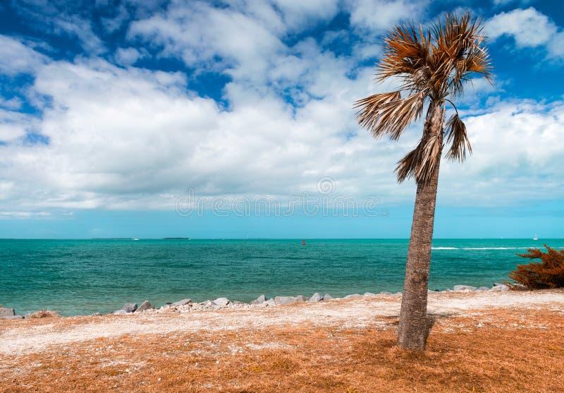 Strand på fortet Zachary Taylor Historic State Park i Key West, Fl royaltyfria foton