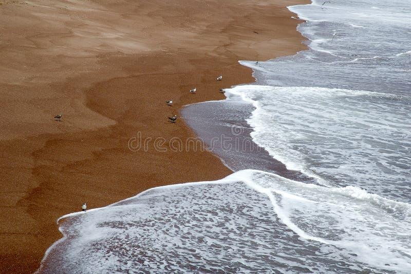 Strand på Paracas, Peru arkivfoton