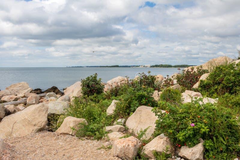 Strand pflanzt Blüte unter den Felsen stockfotografie
