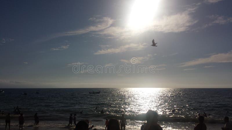 strand Puerto Vallarta royaltyfri bild