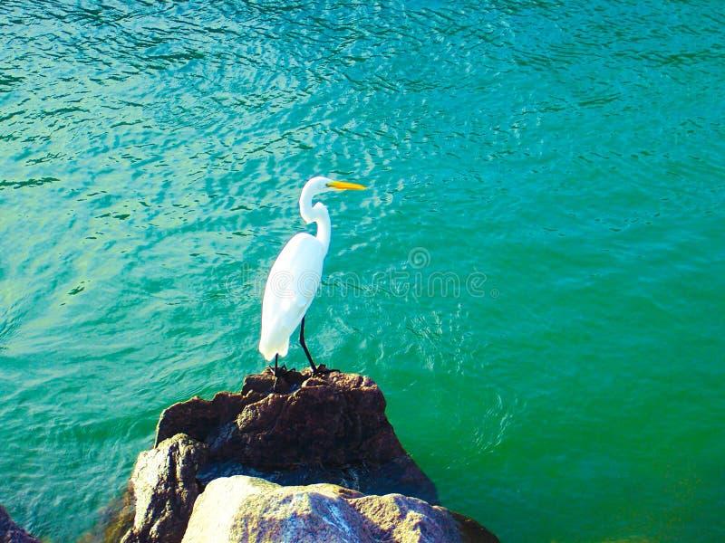 Strand Santa Catarina stock foto's