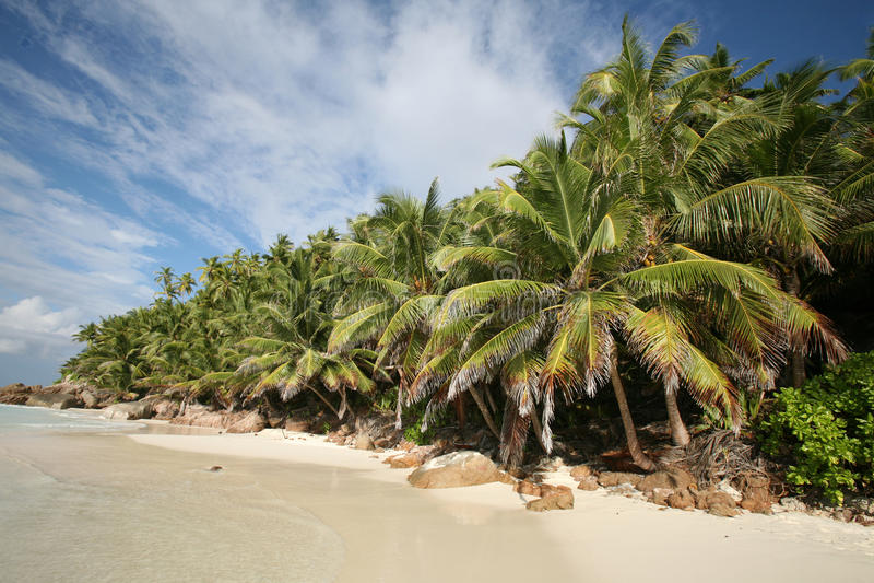 strand seychelles arkivfoto