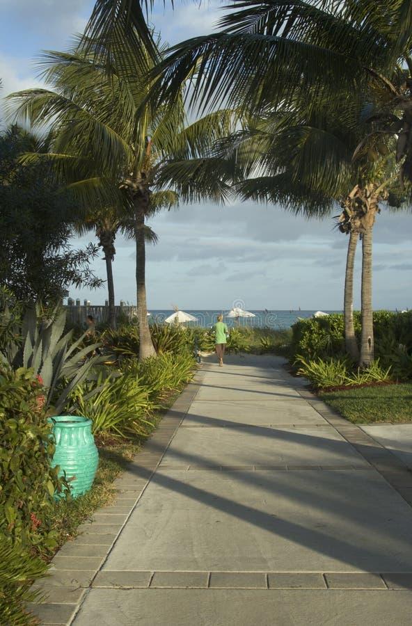 strand som är härlig till den tropiska walkwayen royaltyfri fotografi