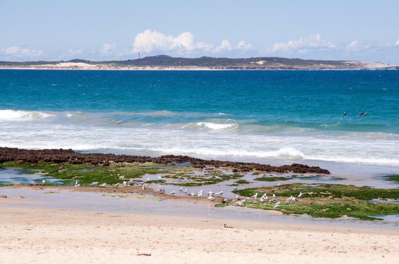 strand sydney royaltyfri foto