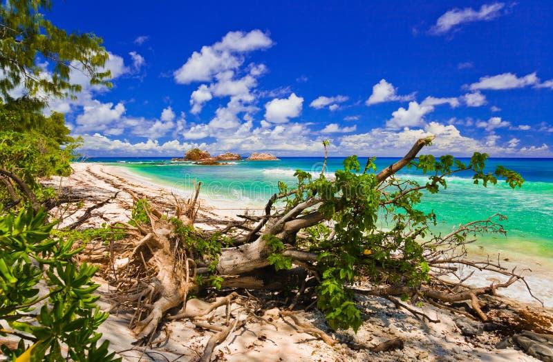 Download Strand tropiska seychelles fotografering för bildbyråer. Bild av stump - 19790217