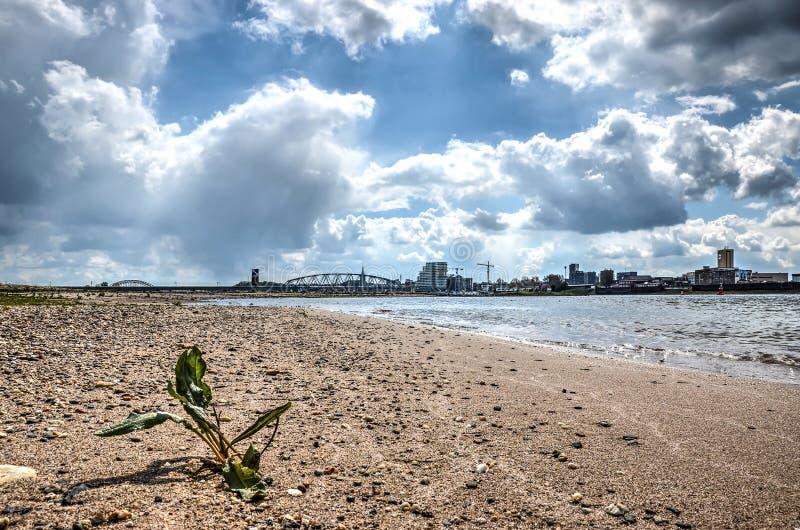 Strand van de rivier Waal stock foto's