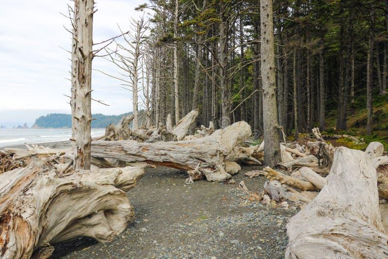 Strand van vreedzame kust in Olympisch nationaal park, Washington, de V.S. royalty-vrije stock foto's