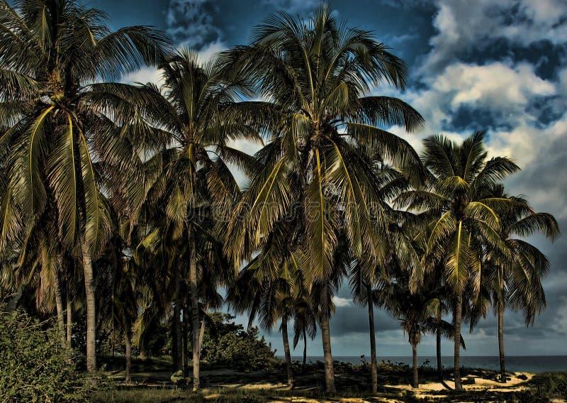 Strand in Varadero stock foto
