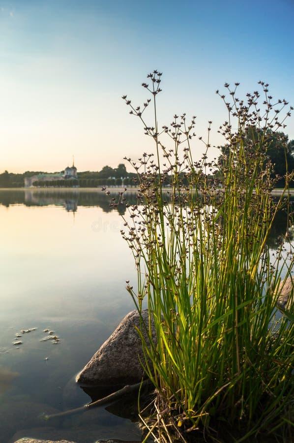 Strand- vegetation på dammet av museum-godset Kuskovo, Moskva arkivfoto
