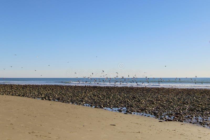 Strand Ventura CA royaltyfria foton