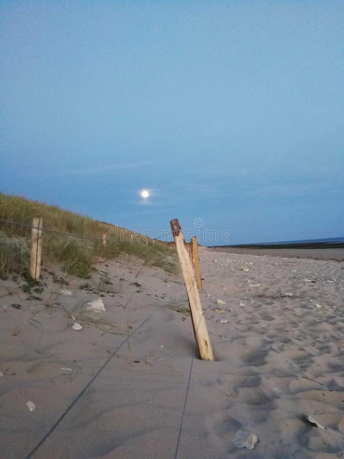 Strand vid moonligjt arkivbilder
