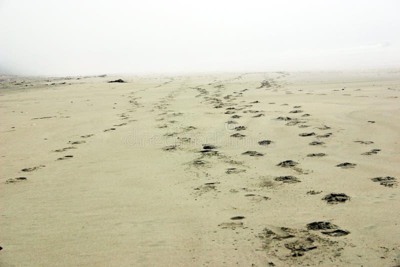 strand voetafdrukken die weg? het Eiland van Vancouver langzaam verdwijnen royalty-vrije stock foto's