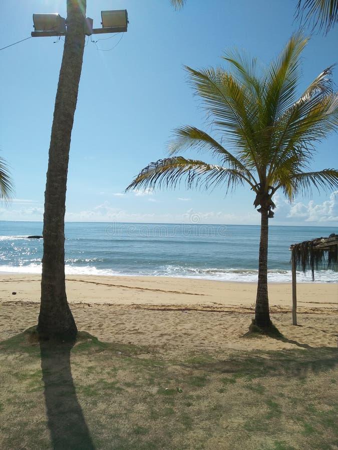 Strand von ¡ Santa Cruzs Cabrà lia, wenn ein Kokosnussbaum das Meer verschönert, ein schöner Hintergrund lizenzfreie stockfotografie