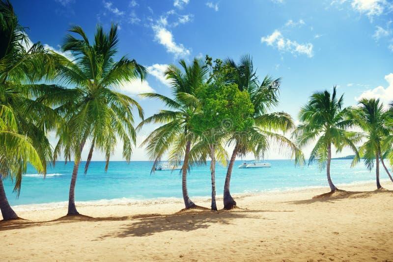 Strand von Catalina-Insel in der Dominikanischen Republik stockbild