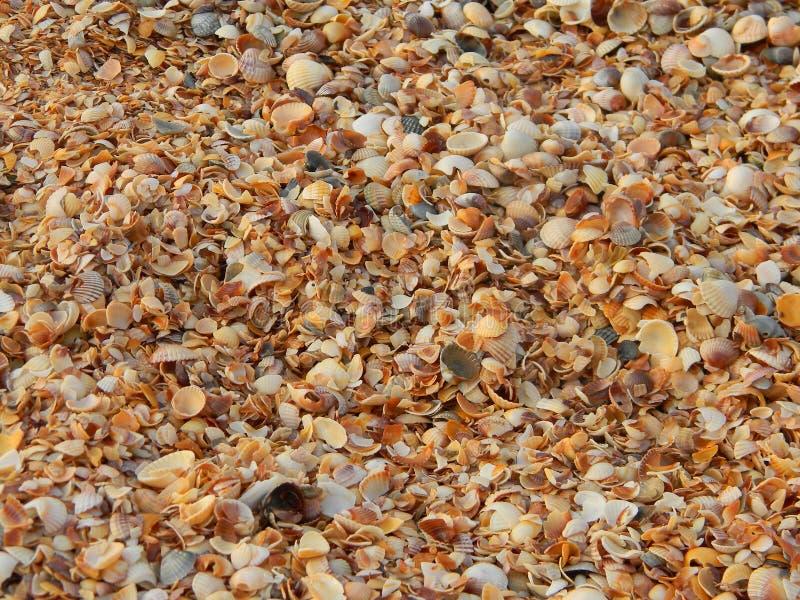 Strand von Muscheln Ukraine stockbild