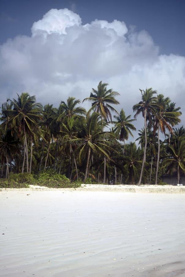 strand zanzibar royaltyfria bilder