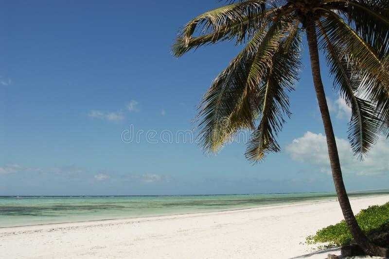 strand zanzibar arkivfoton