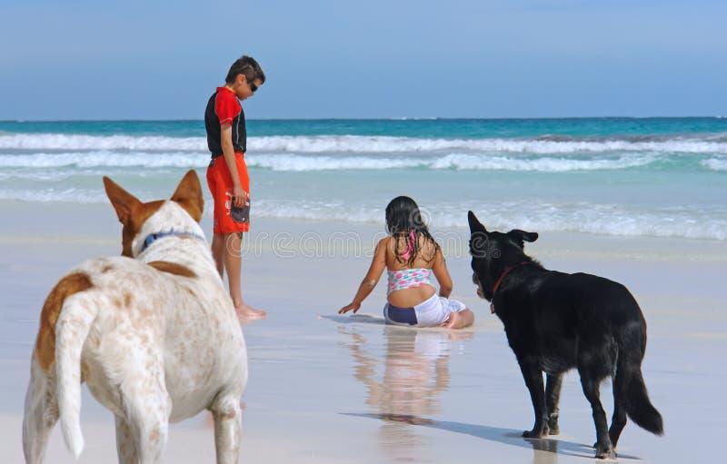 strandbarnhundar som leker vått barn för sand arkivfoto