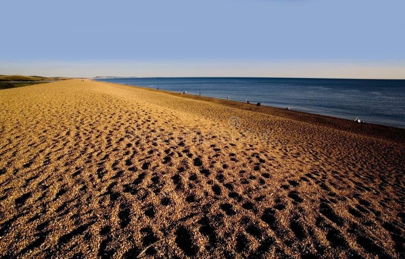 strandchesilkust dorset england arkivfoto