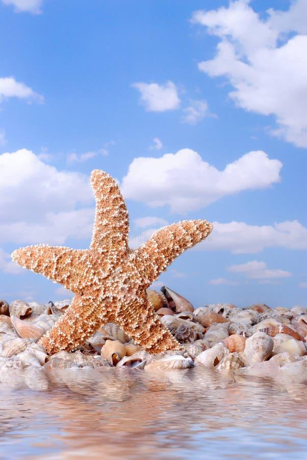 stranddanssjöstjärna royaltyfria bilder