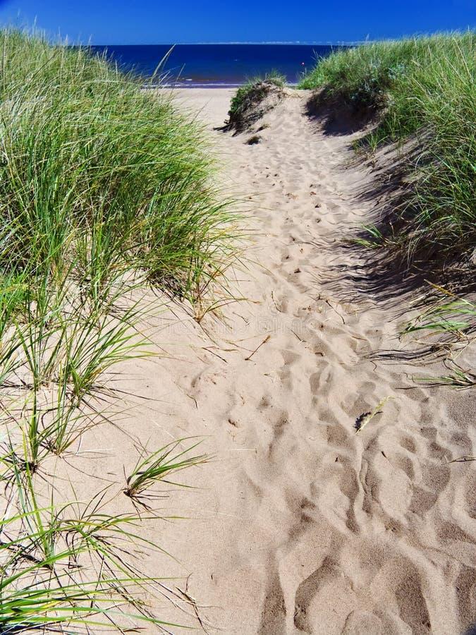 stranddyn arkivbilder