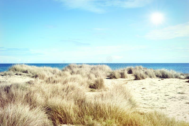 Stranddyn i solen arkivfoton