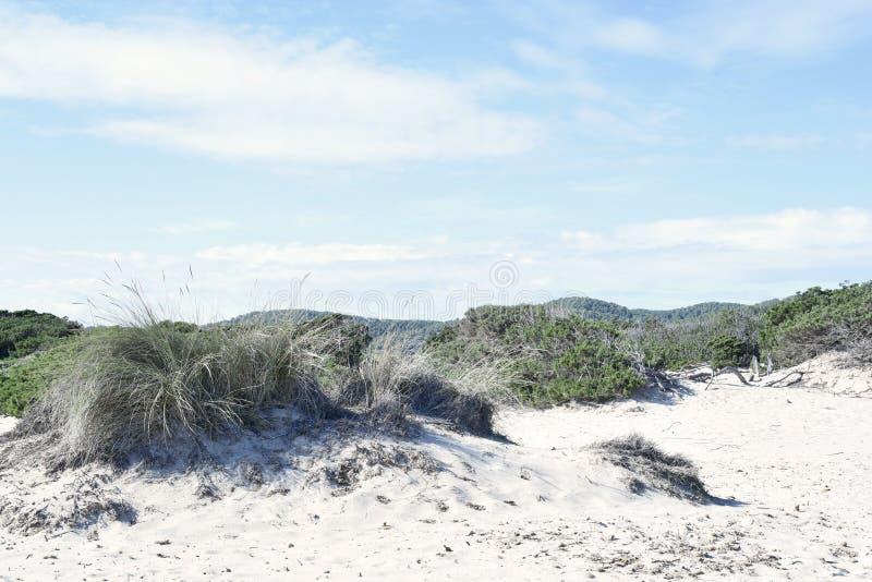 Stranddyn i solen royaltyfri bild