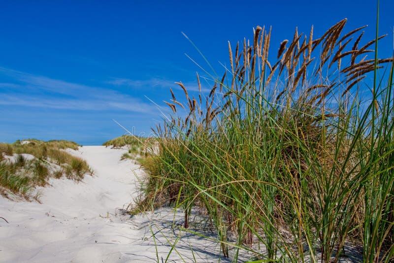 stranddyner gräs sanden royaltyfri foto
