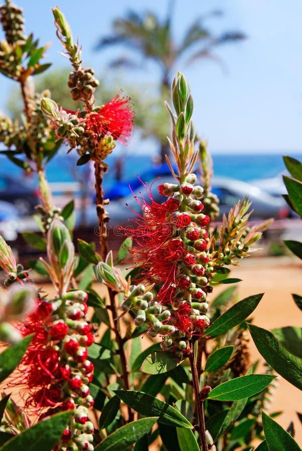 stranden blommar nära arkivbilder
