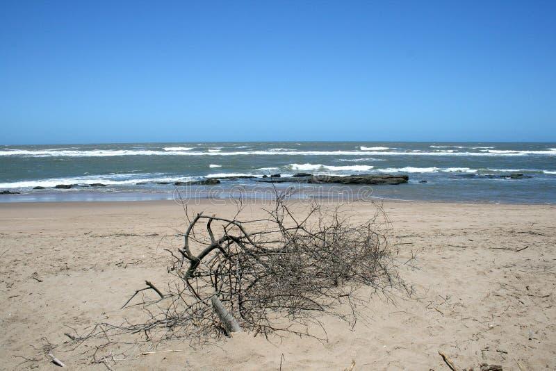stranden branches dött royaltyfri bild
