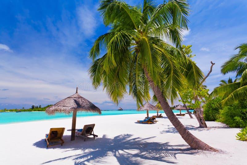 stranden chairs tropiskt under för däckspalmträd royaltyfri foto