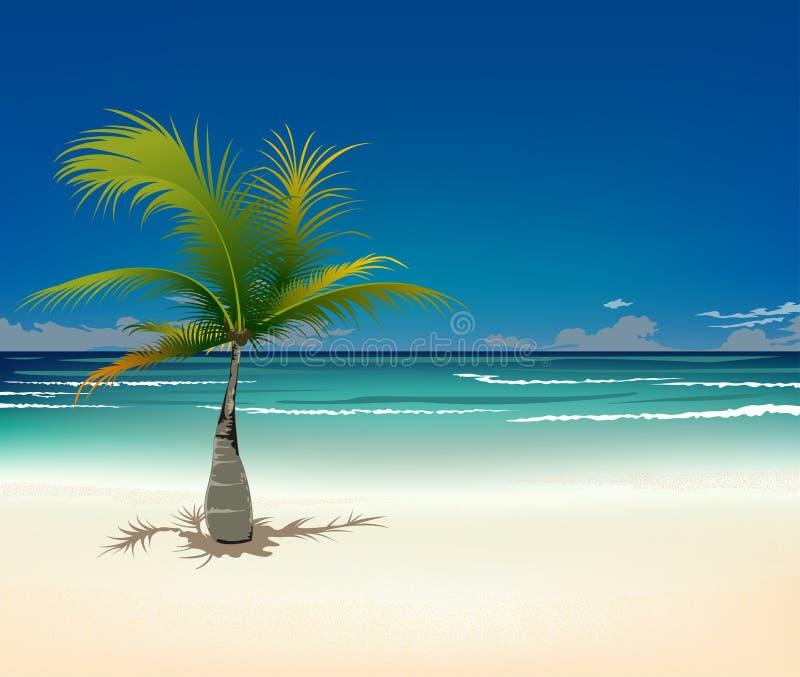 stranden gömma i handflatan tropiskt royaltyfri illustrationer