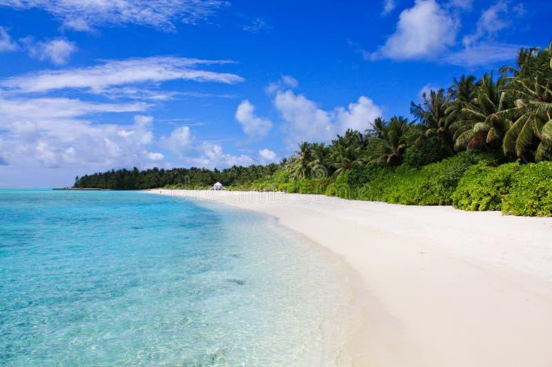 stranden maldives gömma i handflatan sandigt royaltyfri foto