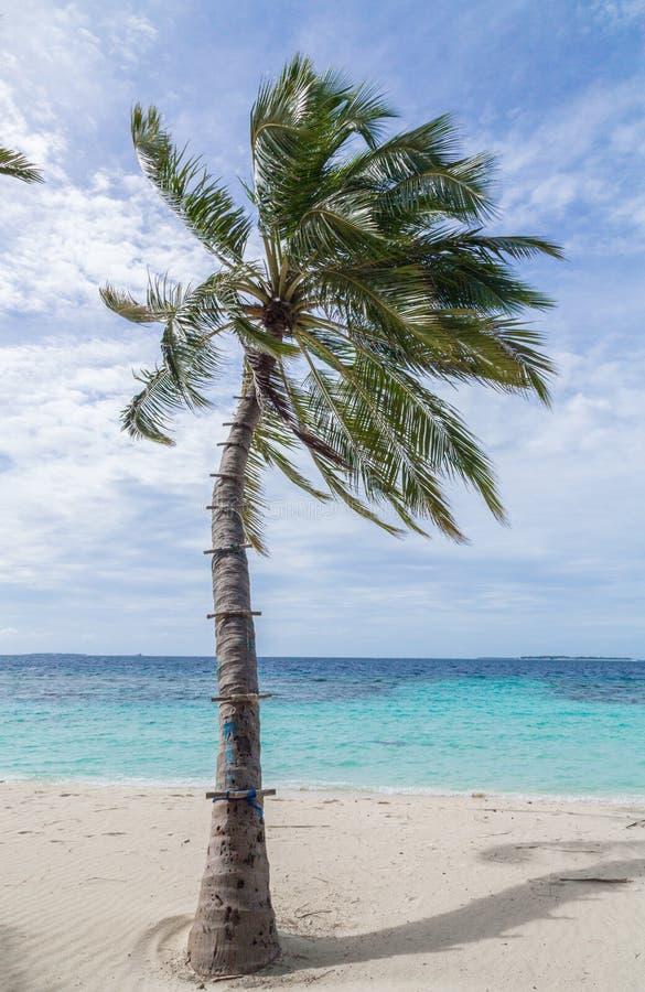 Stranden med gömma i handflatan ön Maldiverna för den Meedhoo Raa-atollen arkivbilder