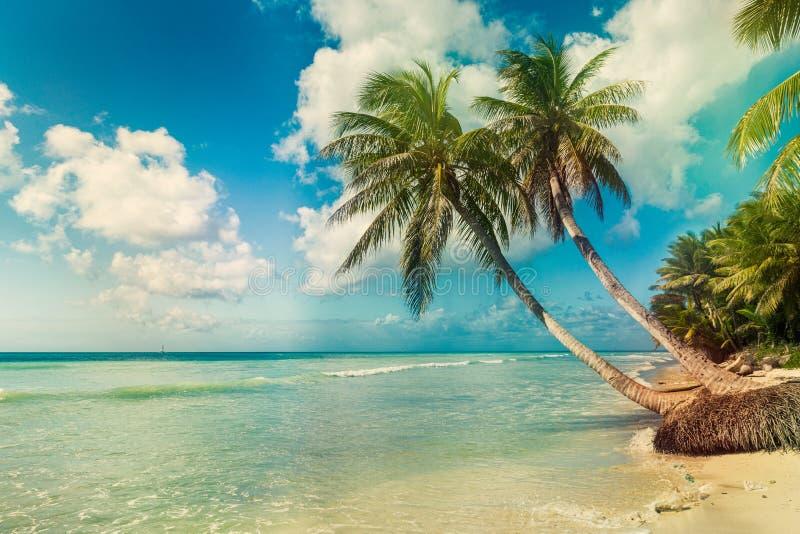 Stranden med kokosnöten gömma i handflatan, den obebodda tropiska ön royaltyfri foto