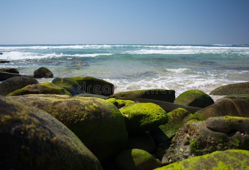 Stranden och mossigt vaggar royaltyfria foton