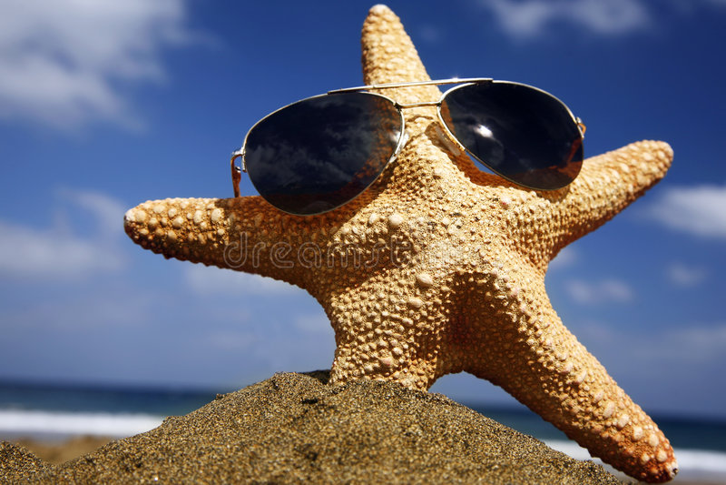 stranden skuggniner sjöstjärnan