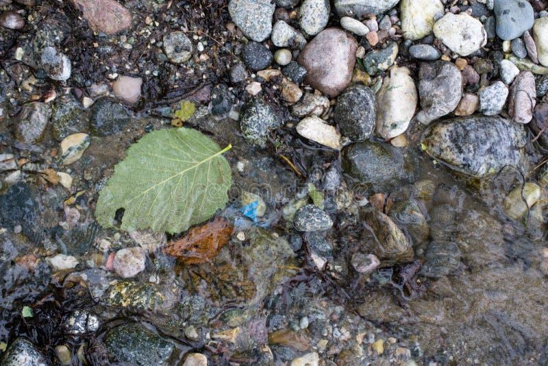 Stranden vaggar det gröna bladet som svävar havvatten royaltyfri foto