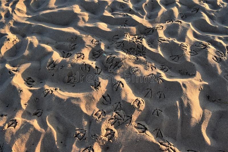 Stranden van Algarve, Portugal stock afbeeldingen