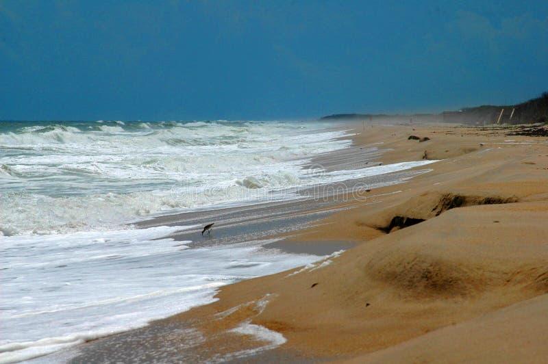 Stranderosie op de Atlantische Oceaan stock afbeelding
