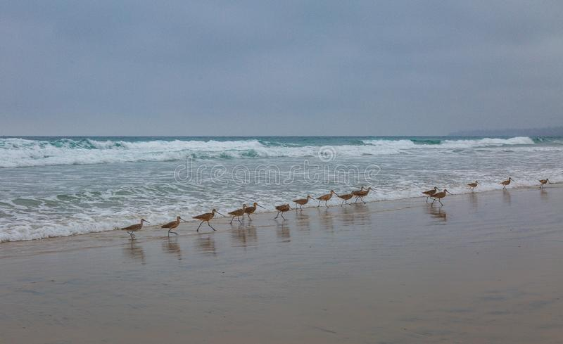 Strandfåglar spelar i havets bränning royaltyfri fotografi