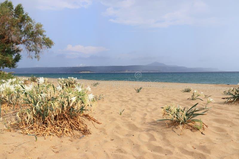 Strandgele narcissen op het zandige strand royalty-vrije stock afbeelding