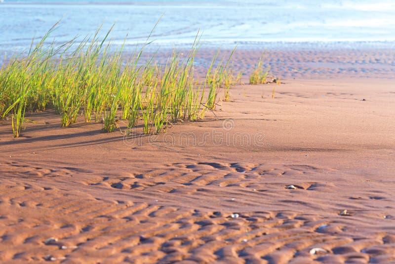 Strandgräs royaltyfria foton