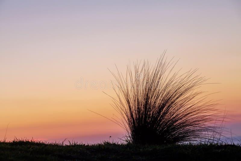Strandgräskontur på solnedgången royaltyfria bilder